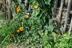 Polder Bloemen