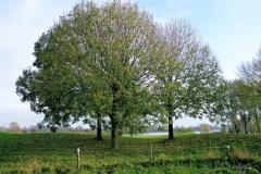 Golfbaan Bomen in de Herfst