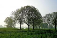 Golfbaan Bomen in de Lente