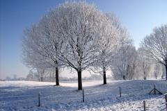 Sneew en Rijp op de Bomen