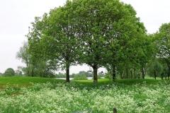 Golfbaan Bomen in de Zomer