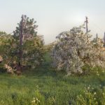 Bloesem van de Bomen in de Bommerlwaard