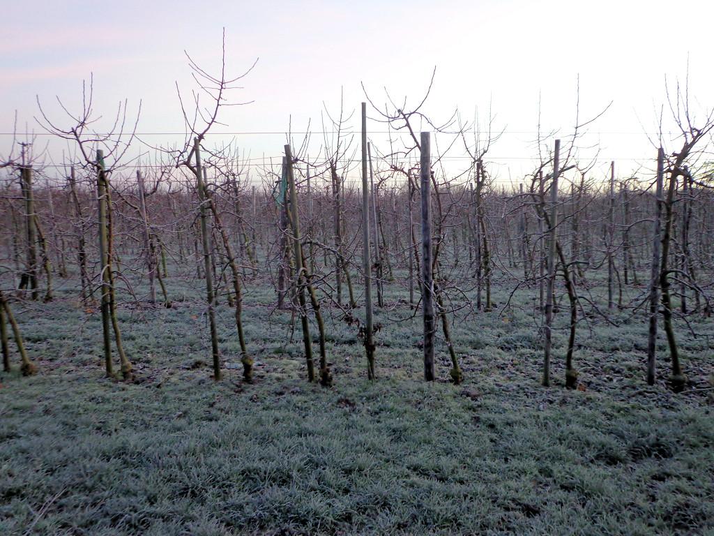 Appelboomgaard Winter rust