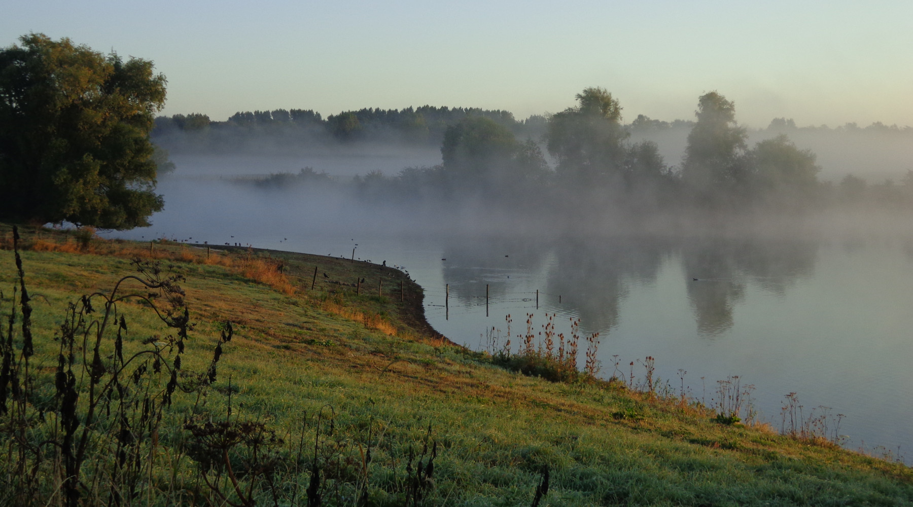 Mist over de Maas Oktober 2016 - 1