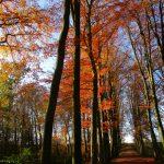 Woensdag Herfst Wandeling