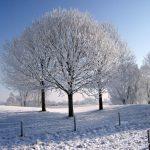 Winter op de Golfbaan bij de Maas
